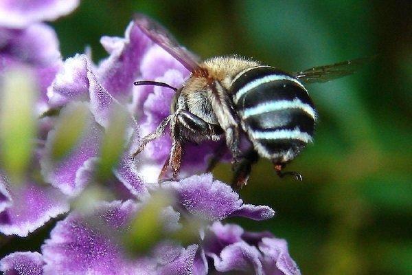 رشد 8 درصدی تولید عسل در استان ایلام