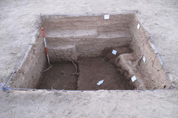 دی. ان .ای باستانی زندگی در گذشته را بازگو نمی کند