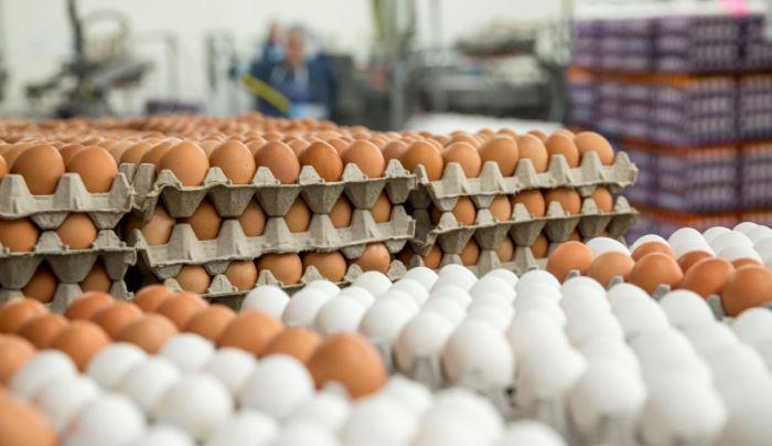 صادرات 60 هزار تن تخم مرغ در نیمه اول سال
