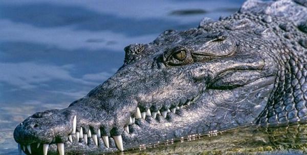 استفاده از اسکنر برای بررسی شرایط دریاچه چیتگر، هنوز خبری از تمساح نیست